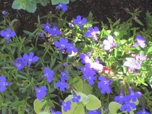 paars voorjaar 007